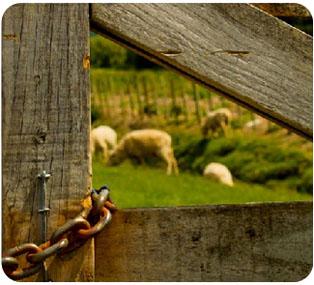 Organic NZ Wool